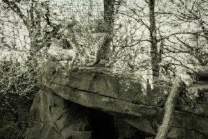 ParcZoologique-2560- pumas